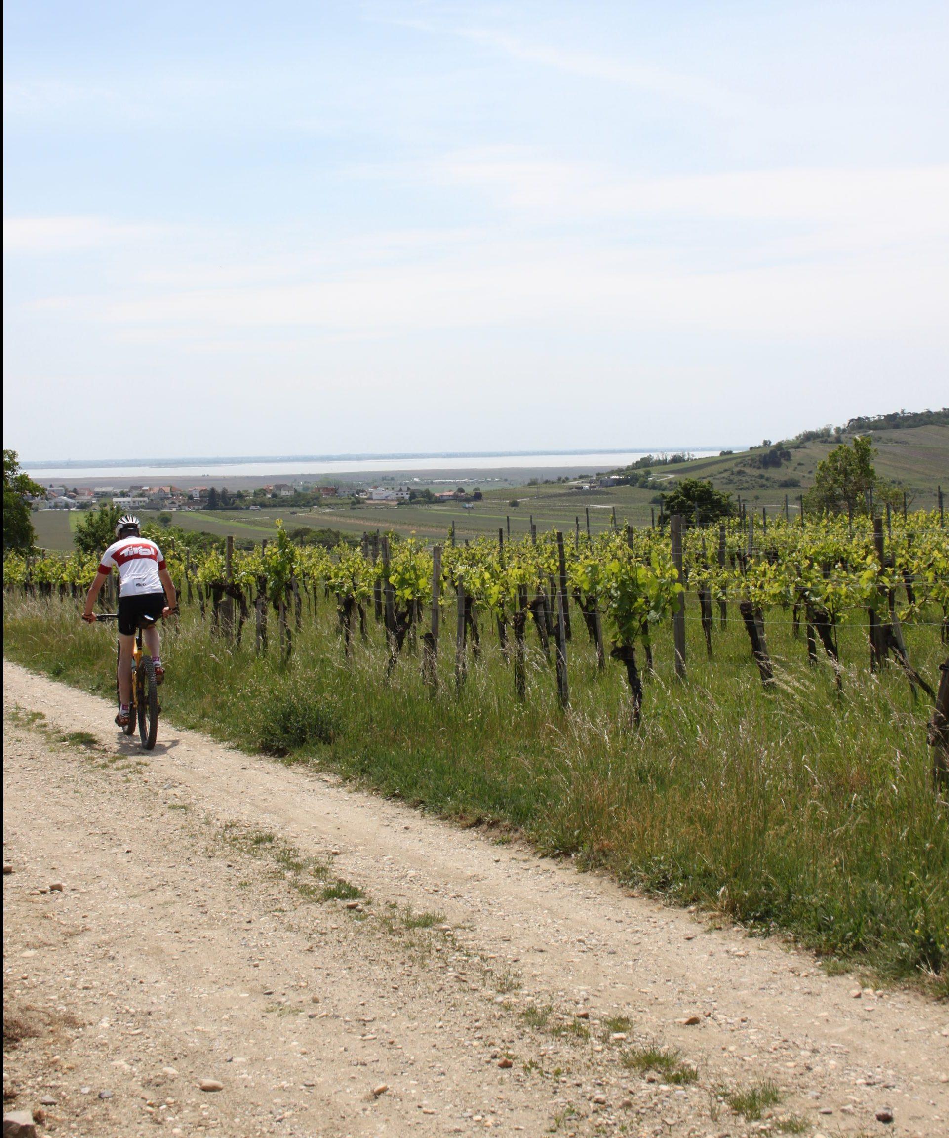MArtin Scheiber auf Fahrrad in den Weinbergen bei Joss